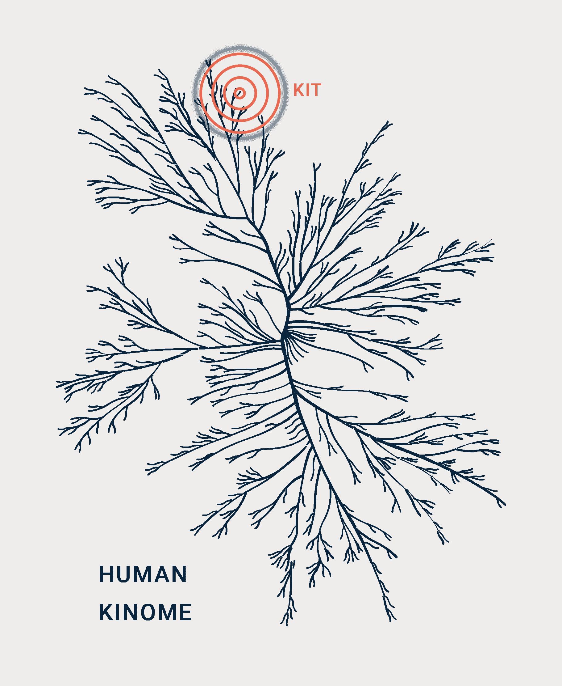 Kinome graphic